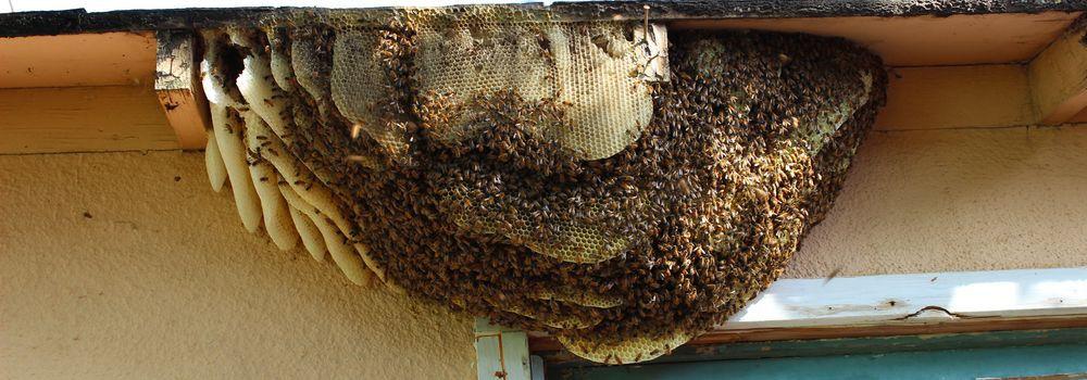 Bee hive on a house