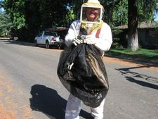 Bee Removal Expert with bag of bees
